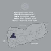 Harazi-Sharqi-Café-De-Especialidad-De-Yemen-Mokha-Bunn